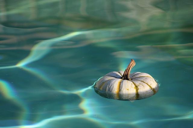 dýně ve vodě